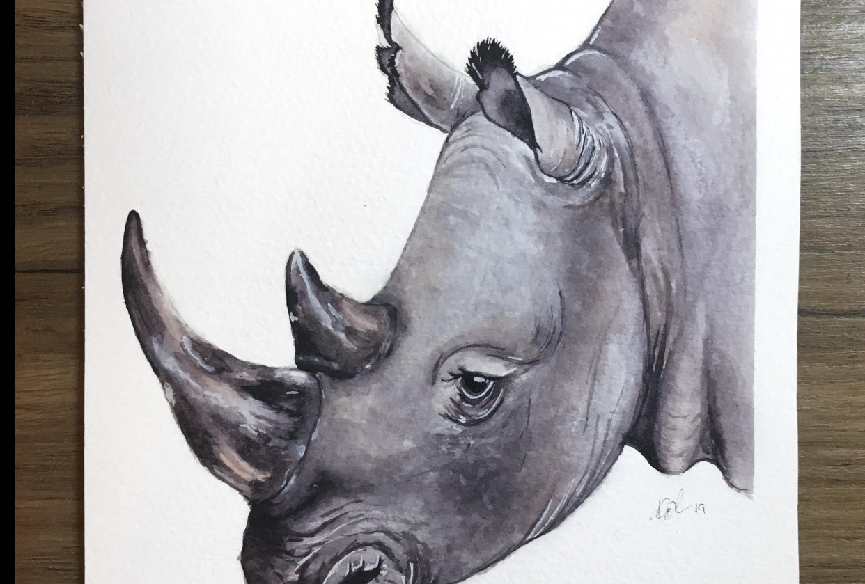 First attempt at a Rhino - student project