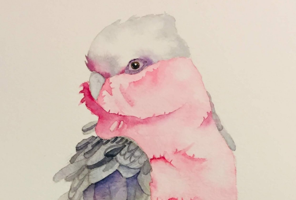 Finished Galah - student project