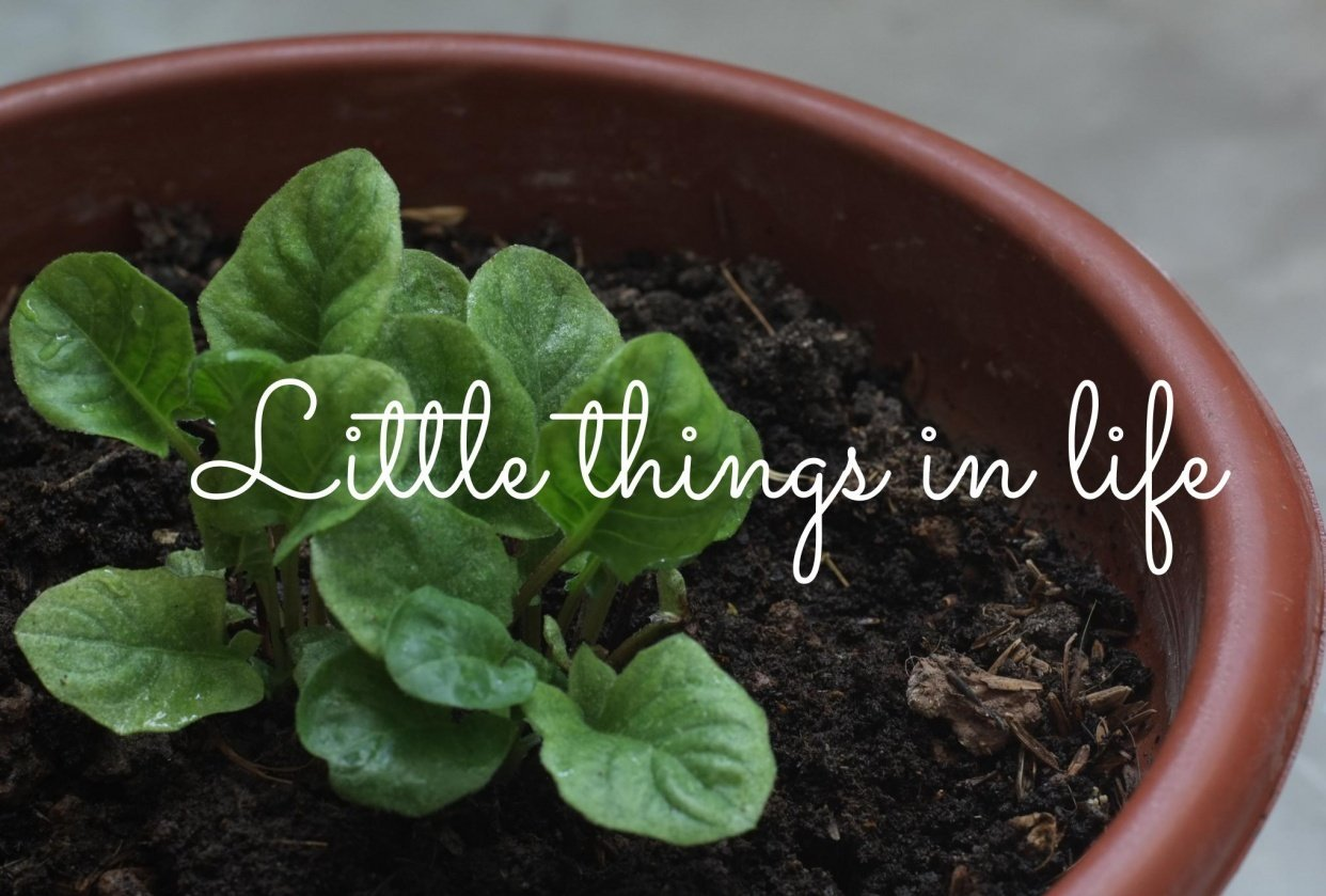 Little things that matter - student project