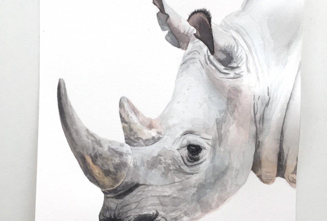 Watercolor Rhino - student project