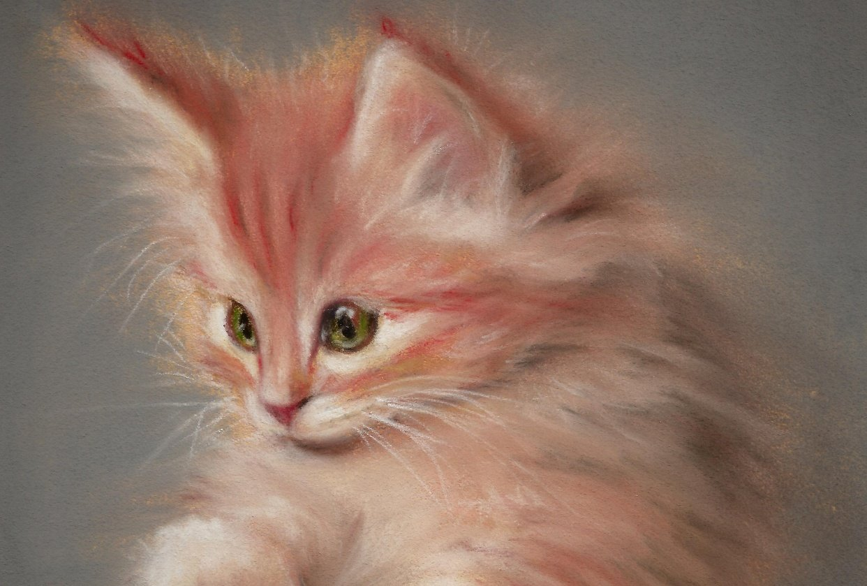 A fluffy kitten - student project