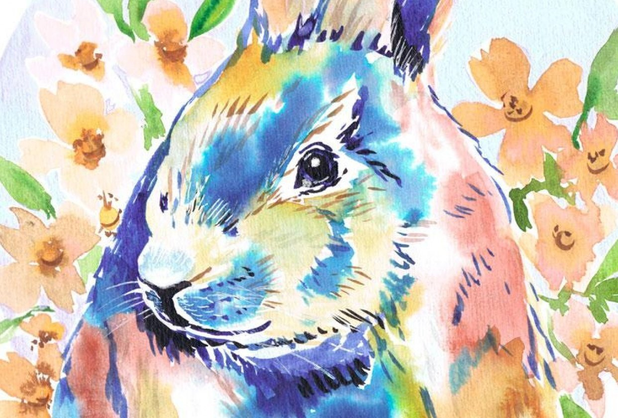 animals - student project