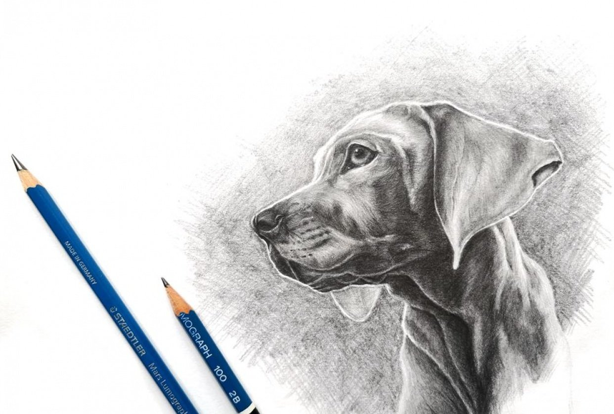 Example Project: Dog Portrait - student project