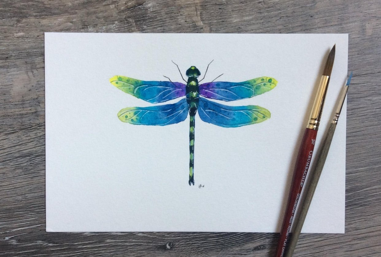 Watercolour Dragonfly - student project