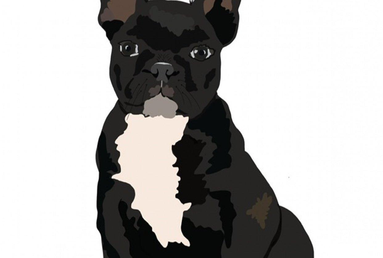 Pet Portrait - student project