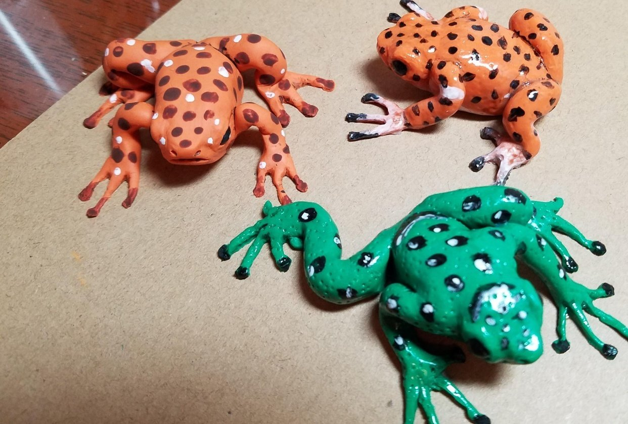 frogs - student project