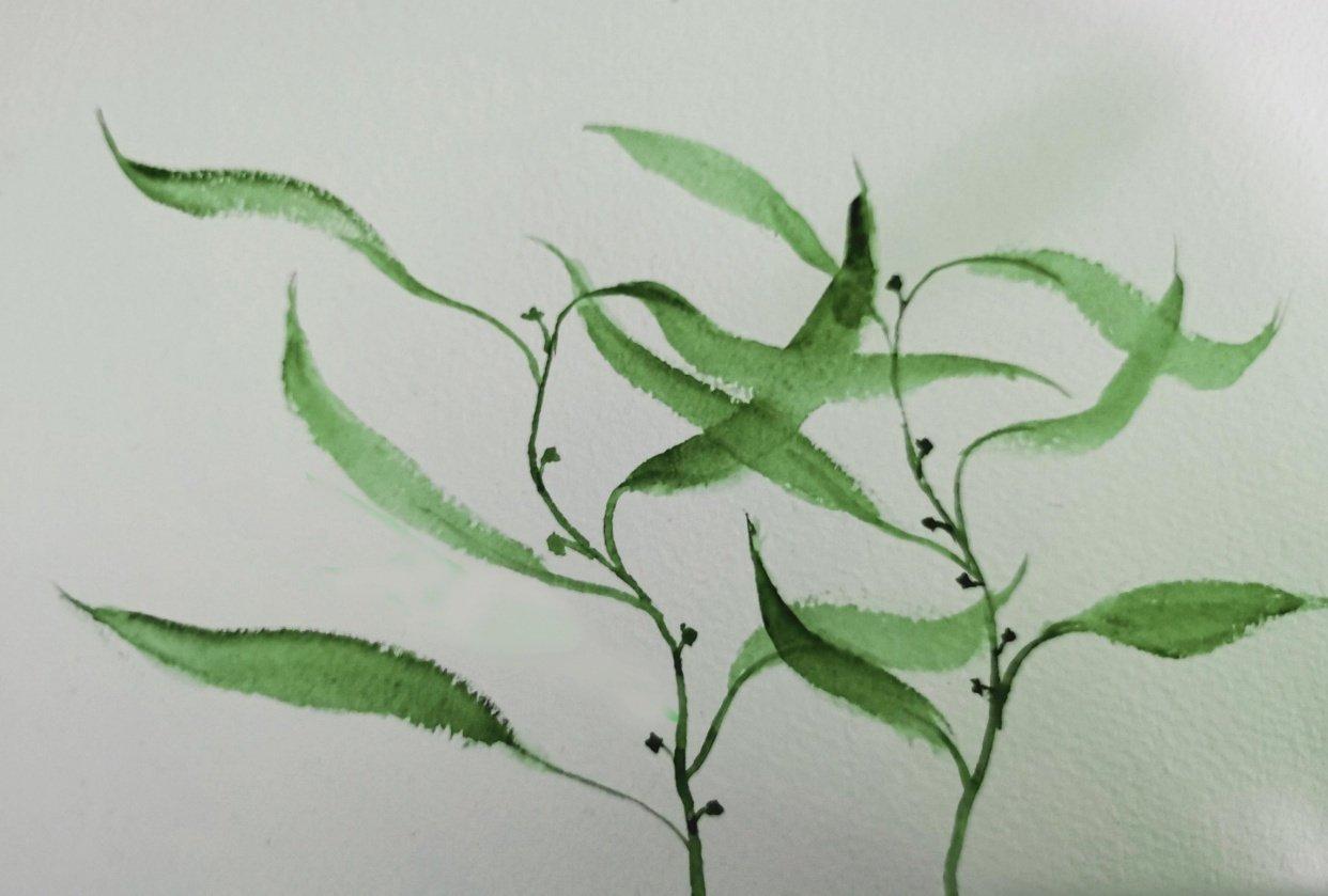 Botanical WaterColour - student project