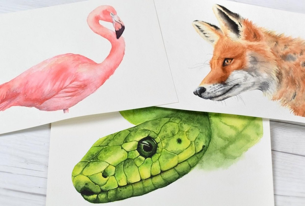 Fur, Feathers, and Scales - Oh my! - student project
