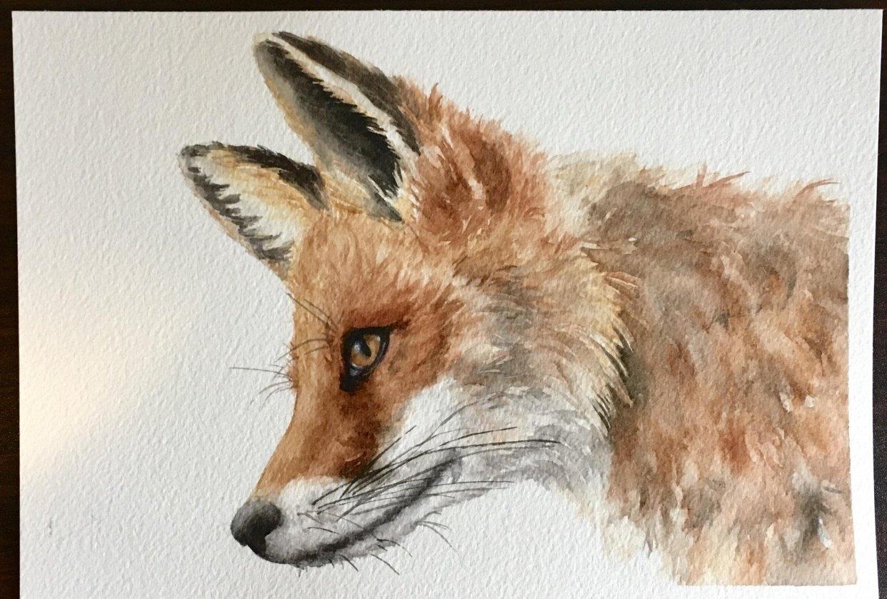 Fur Textures - In Progress - student project
