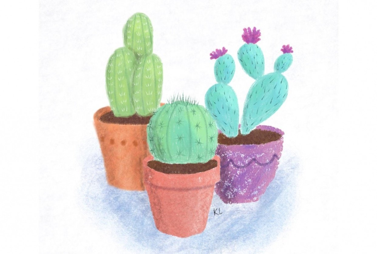 Cactus drawing - student project