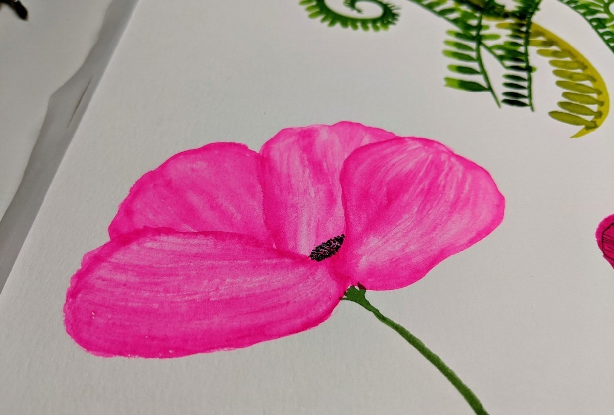 Pink Poppy - student project