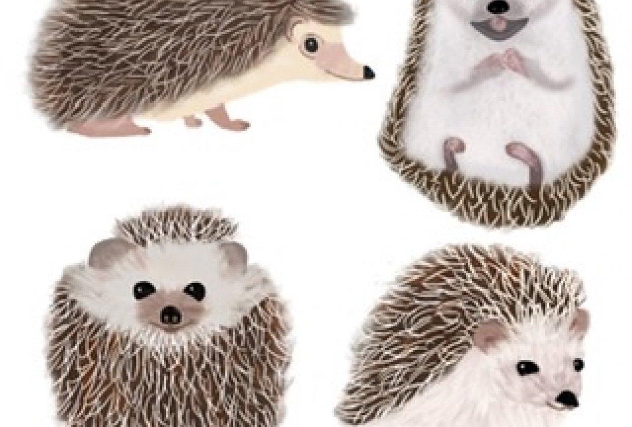 Rachel's Hedgehogs - student project