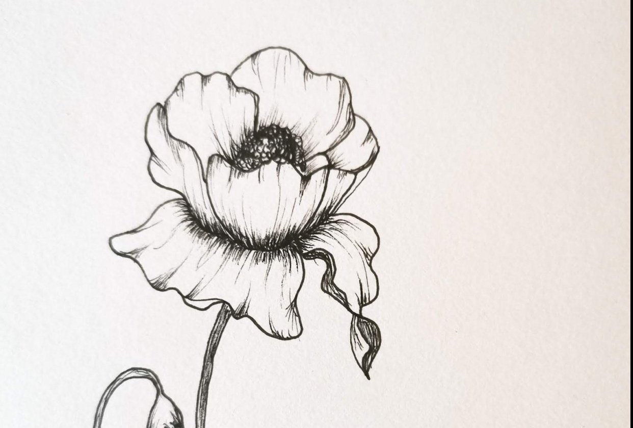 Poppy - shading practice - student project