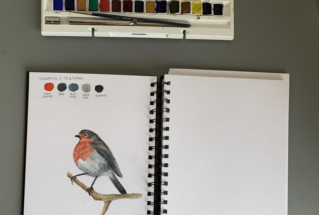 Drawing and painting a robin - student project