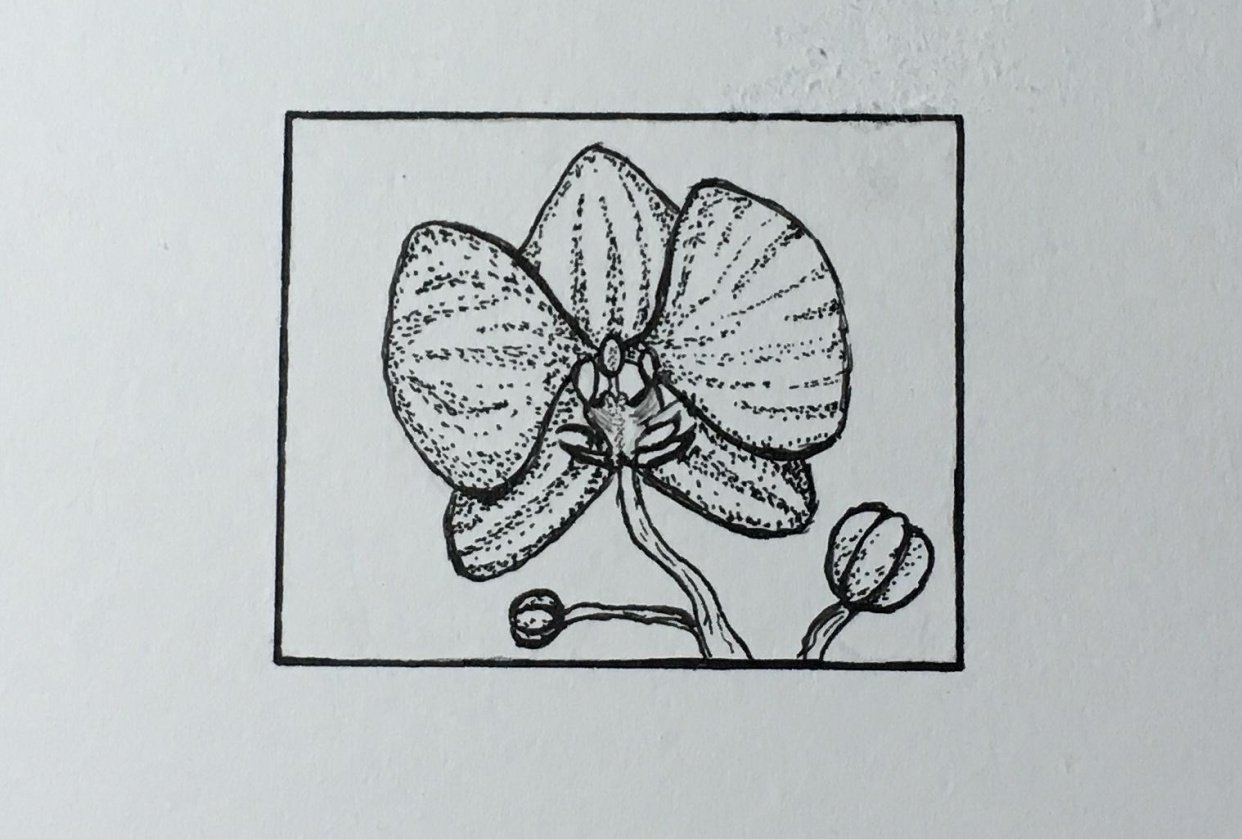 Orchid :) - student project