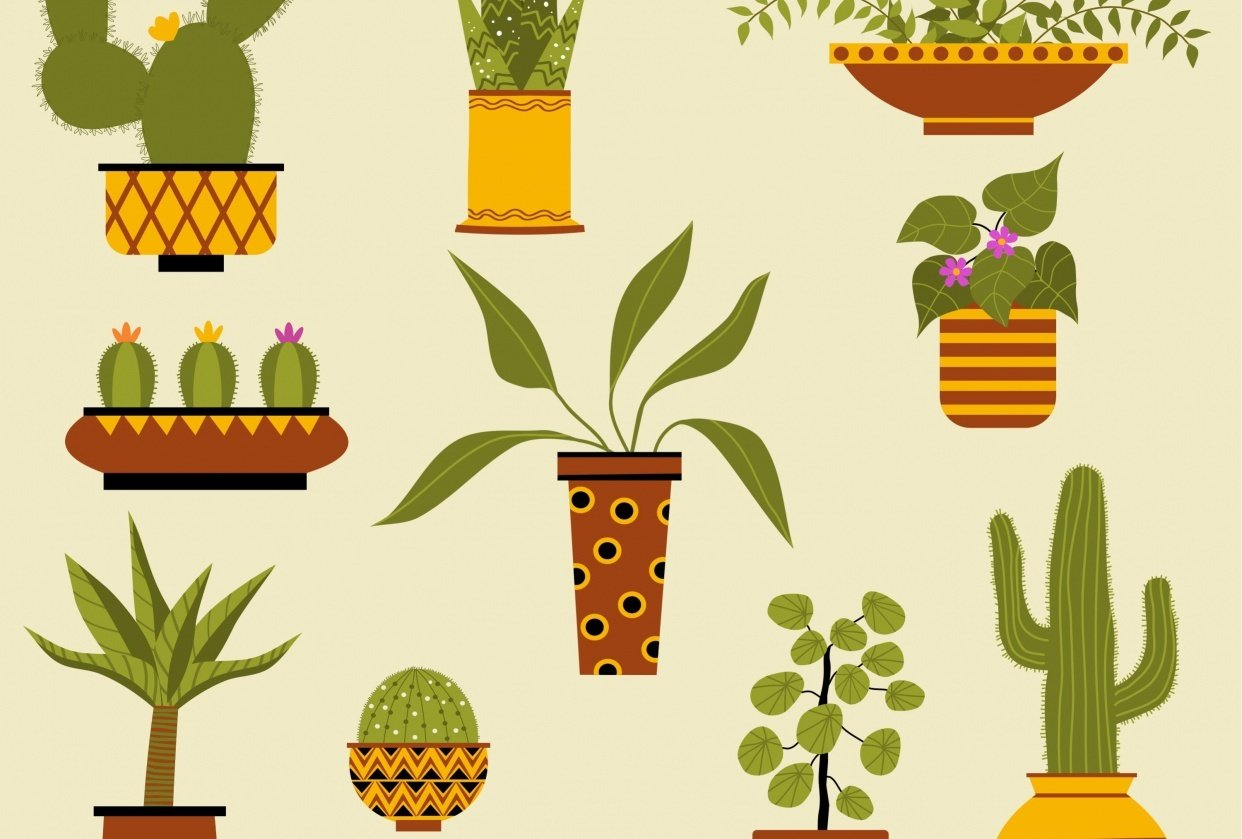 Houseplants - student project