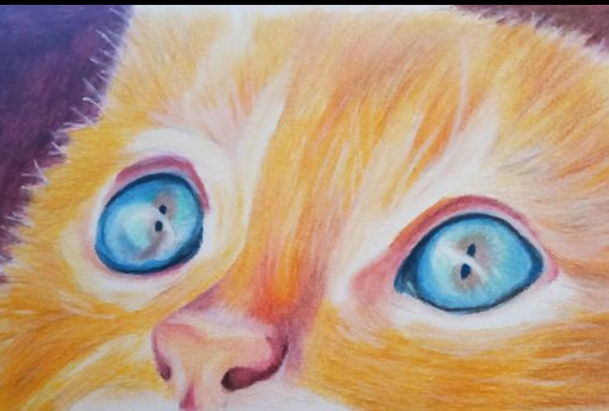 Coloured Pencil Cat - student project