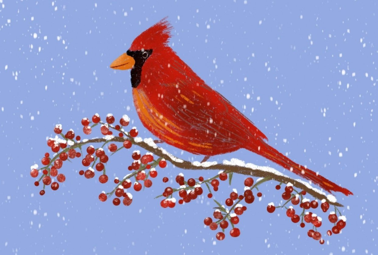 Fun winter tutorials - student project