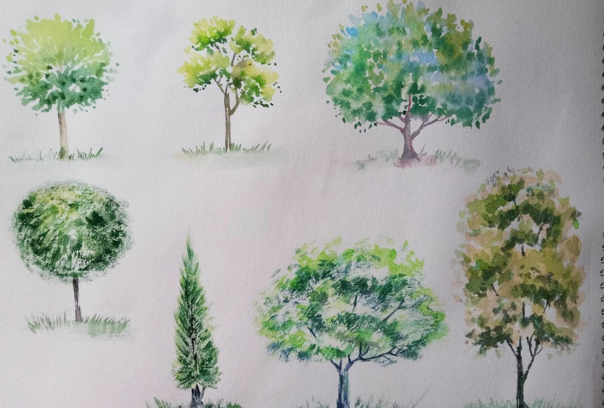 Watercolour Greenery: How to Paint Trees - student project