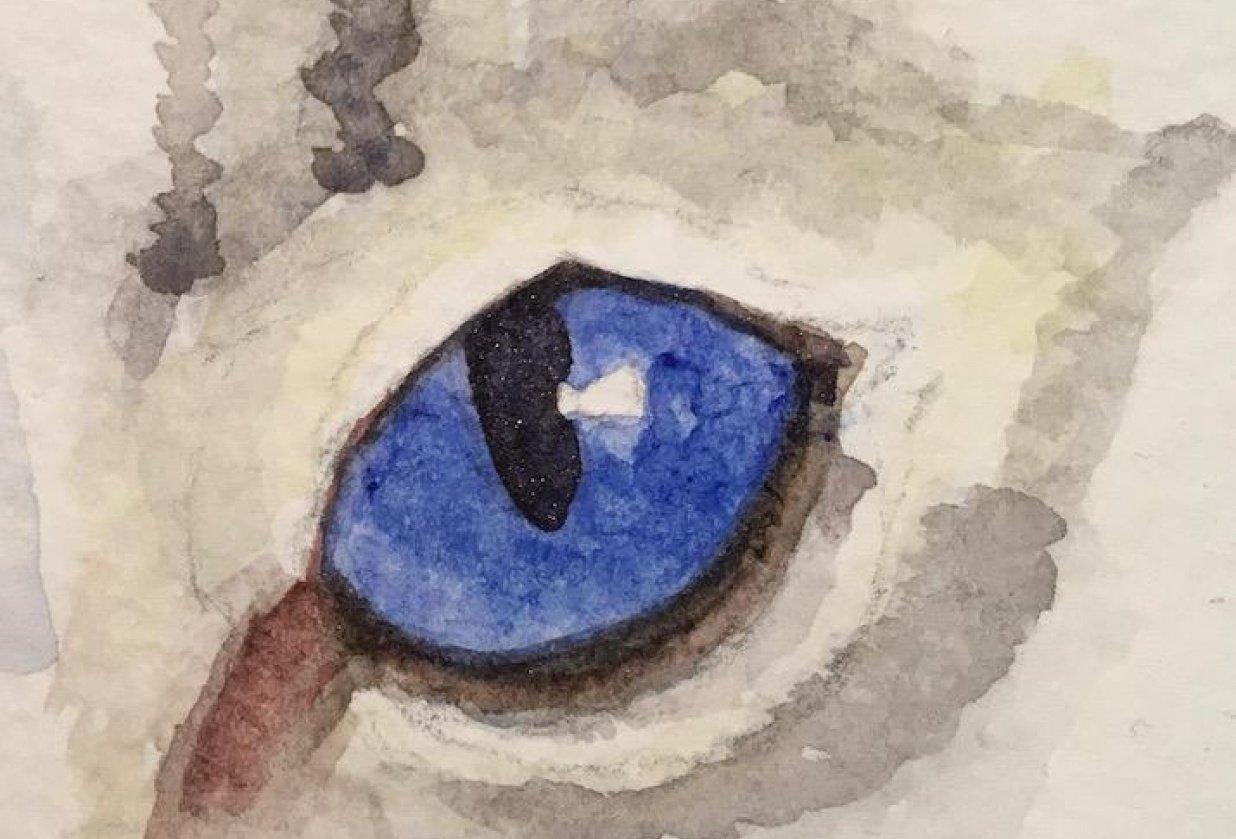 Animal Eye Studies - student project