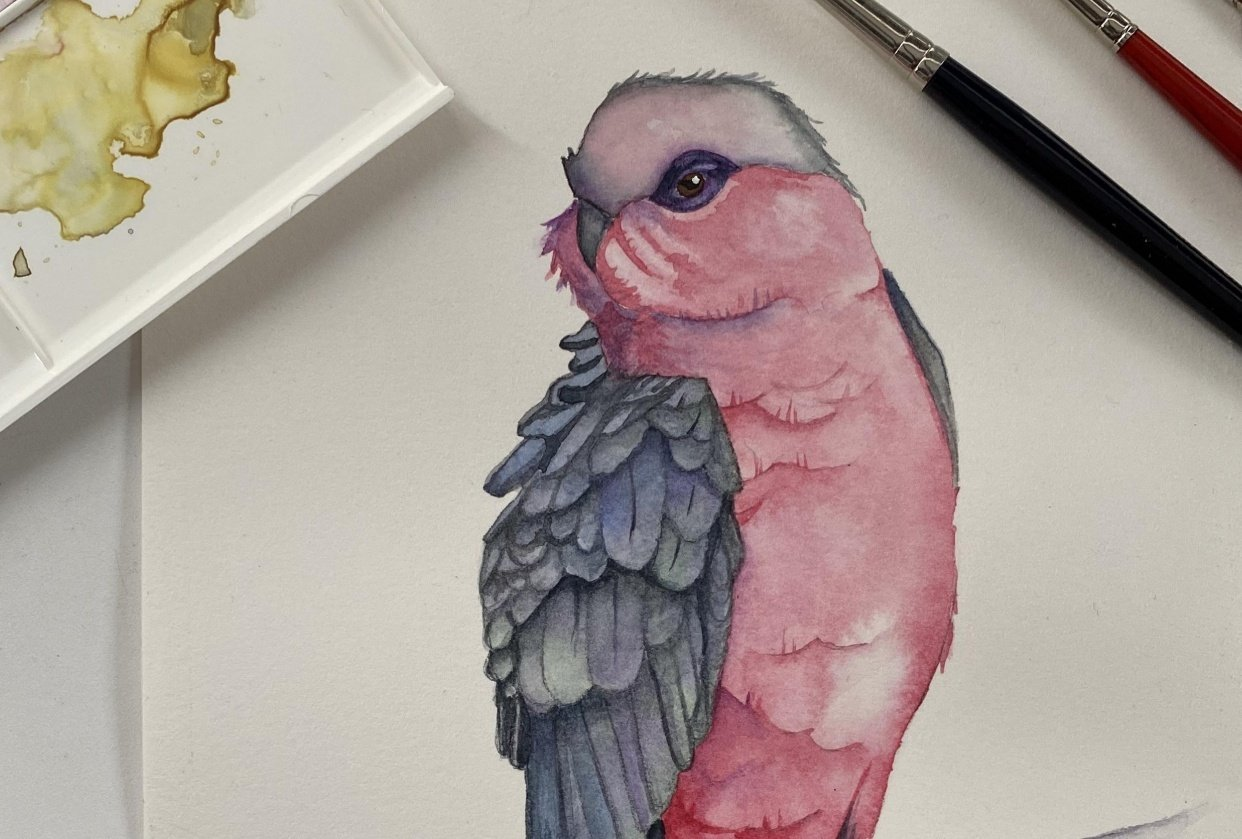 My Galah - student project
