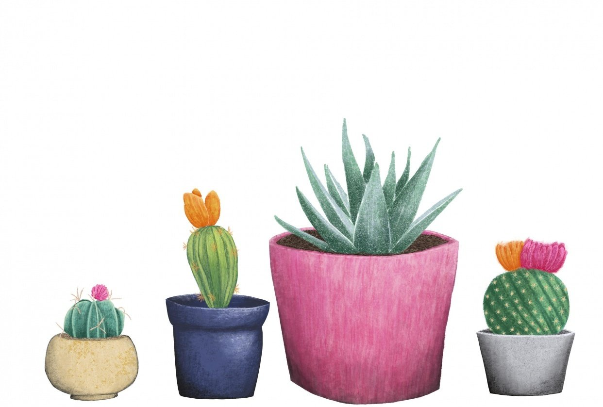 Textured Cacti in Pots - student project