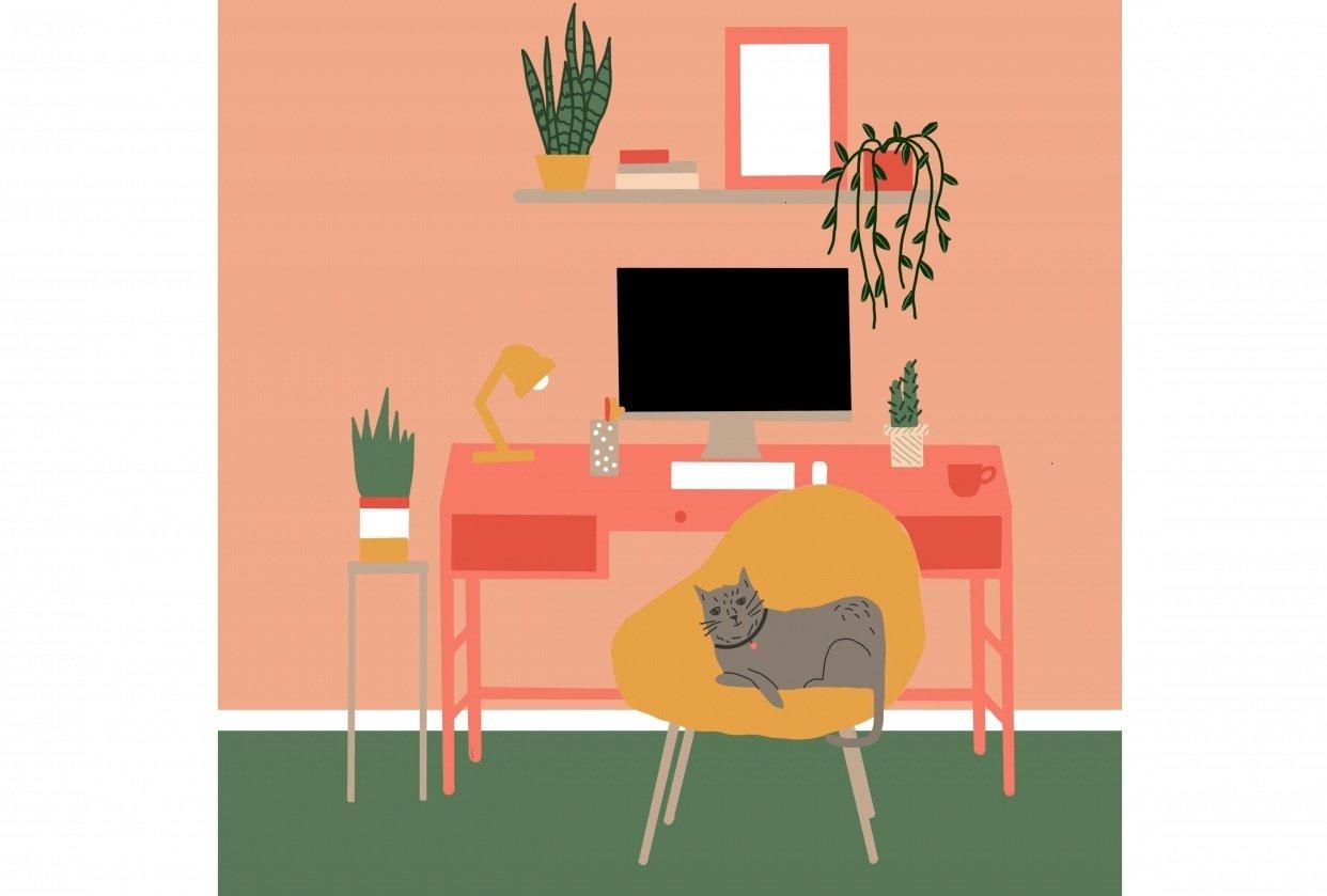 Studio cat - student project