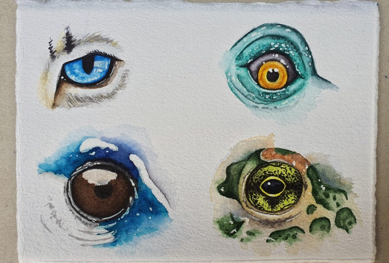Animal Eyes   Ariana Iacono - student project