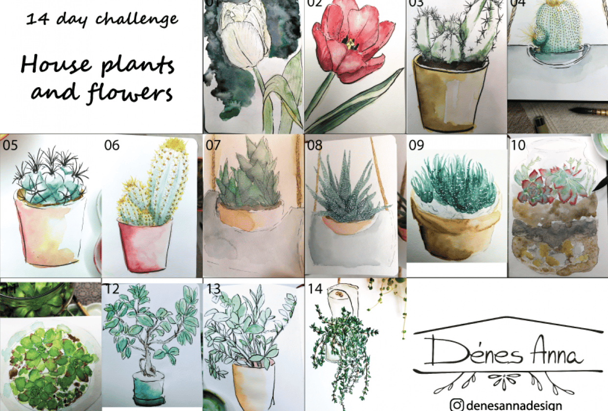 House plants and flowers - student project