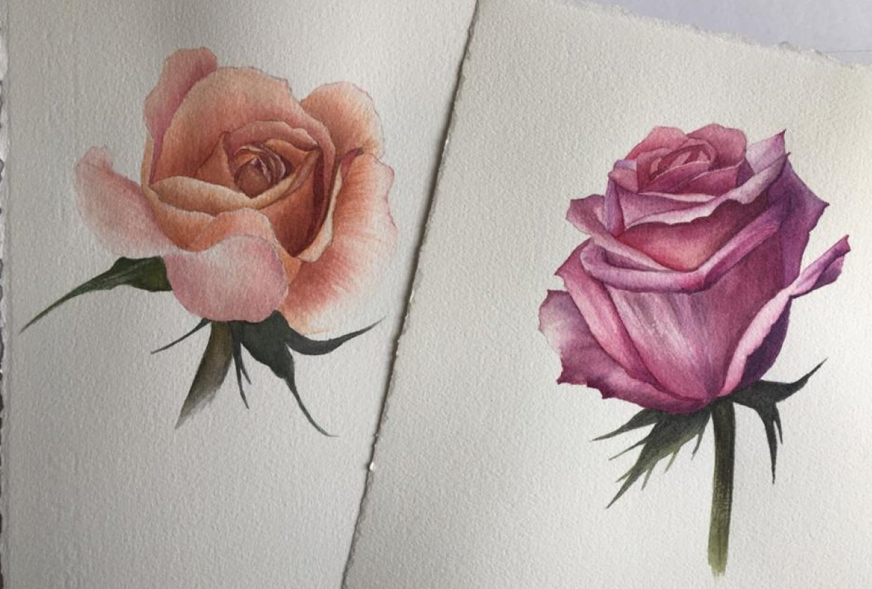 Watercolour Rose - student project
