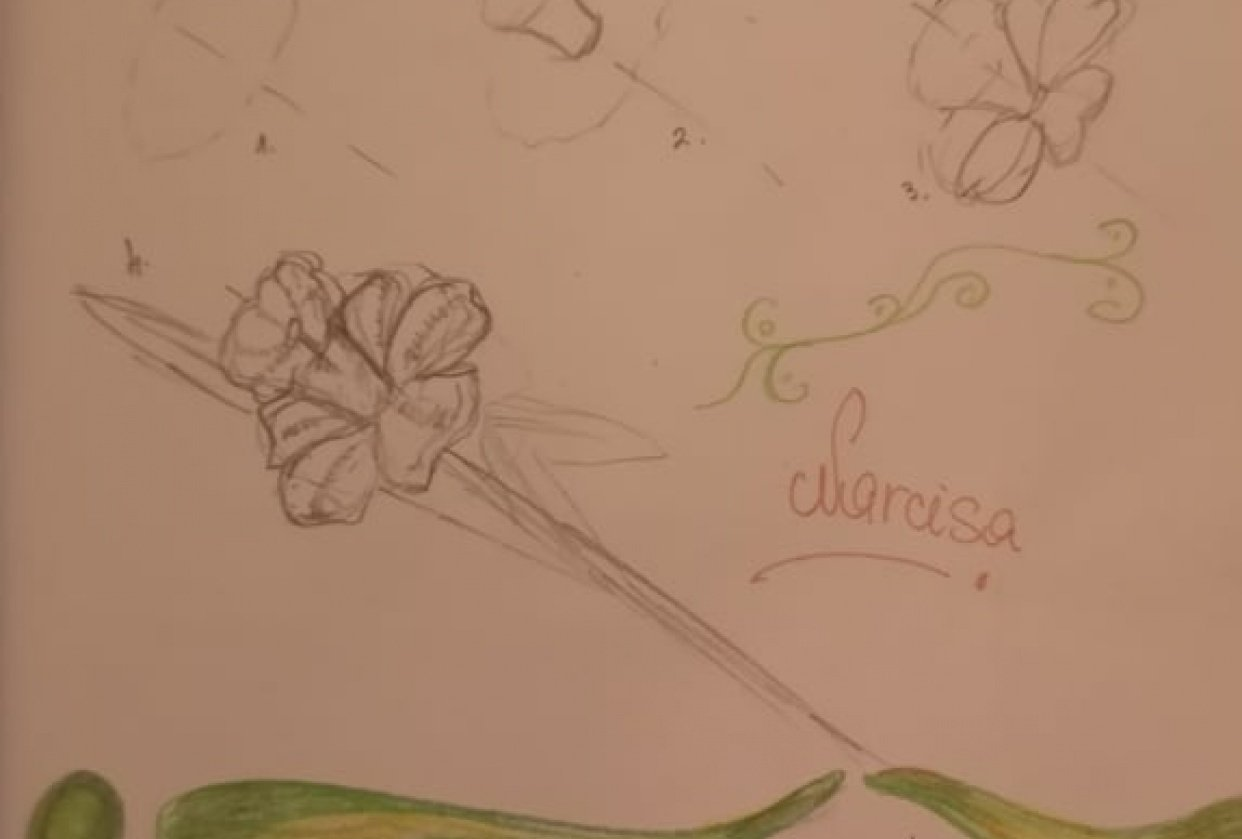 Skicirka cvetje - student project