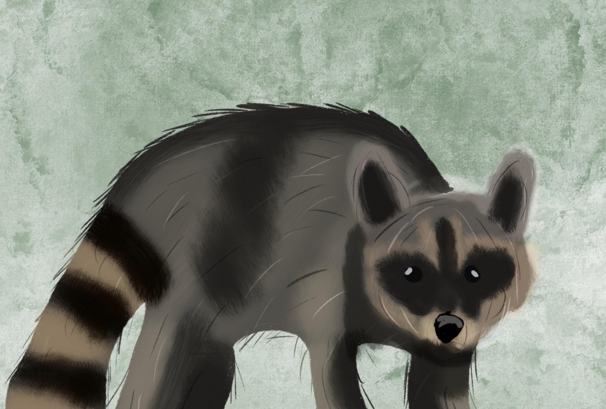 Fox and Raccoon - student project