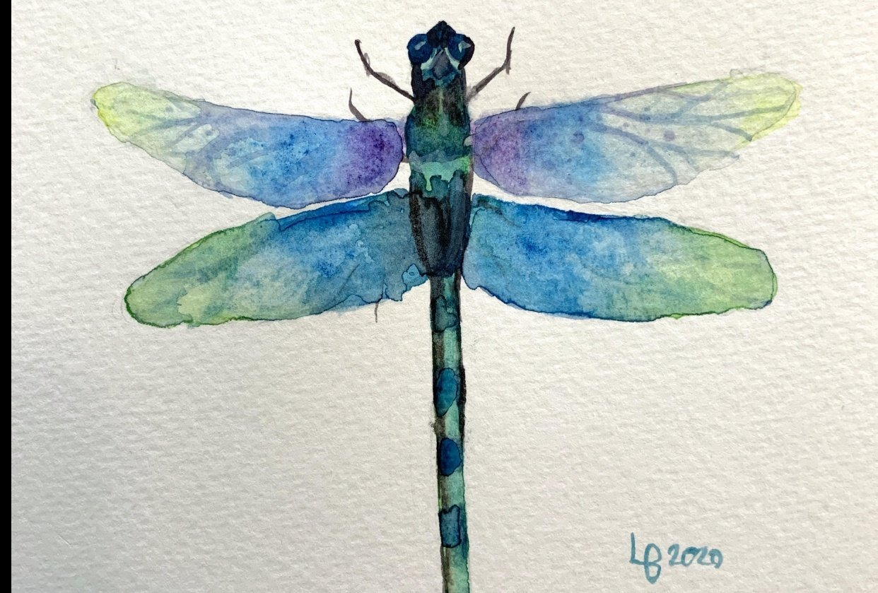 Dragonfly Process - student project