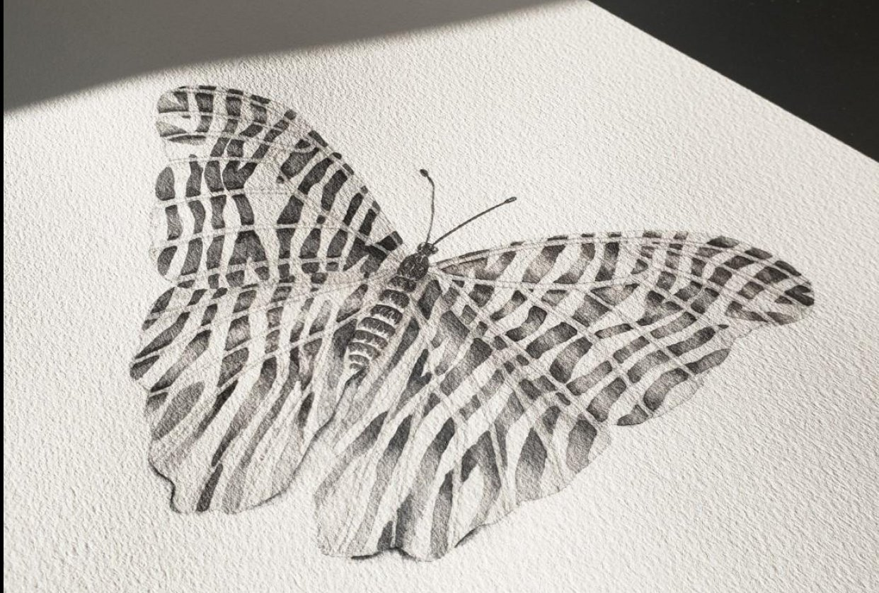 Butterfly with Zebra Stripes - student project