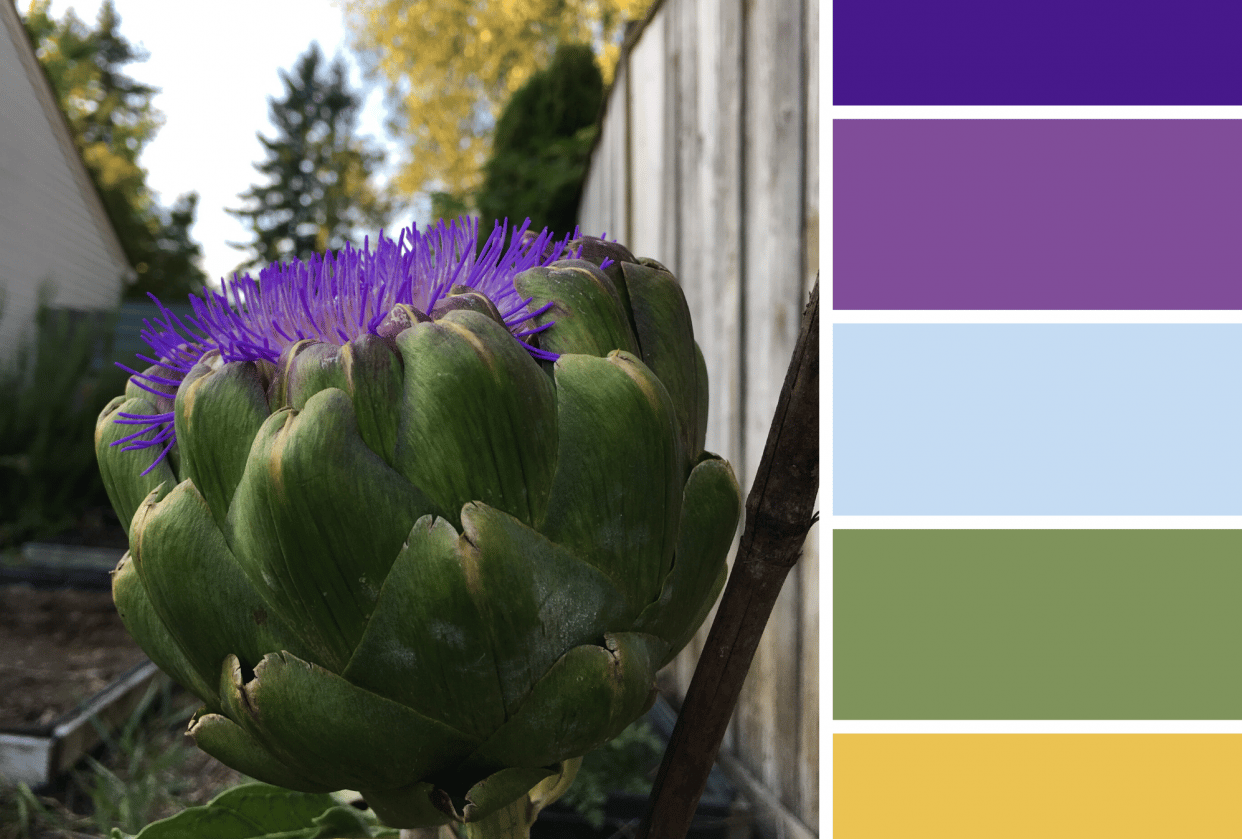 Artichoke in the Fall - student project
