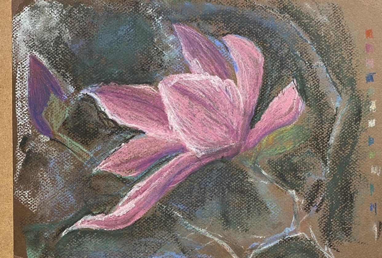Oil Pastel (and soft) Japanese Magnolia - student project
