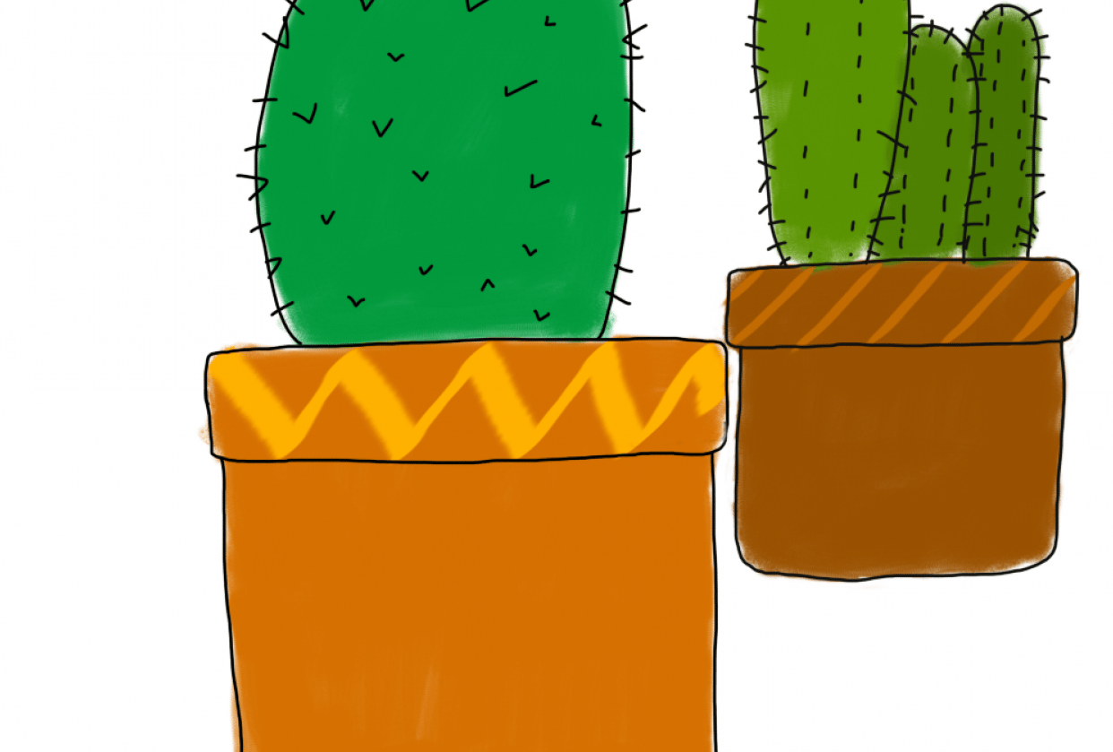 cacti & other plants - student project