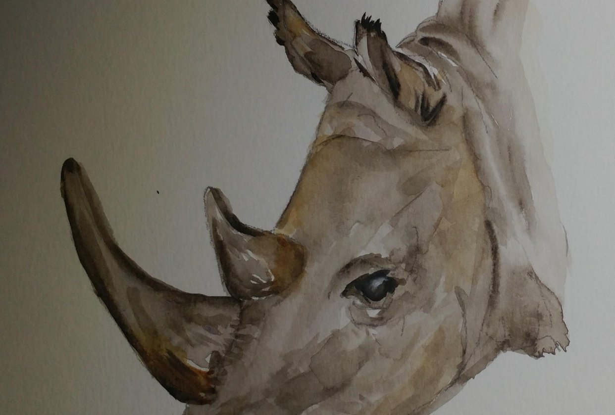 Rhino Class Project - student project