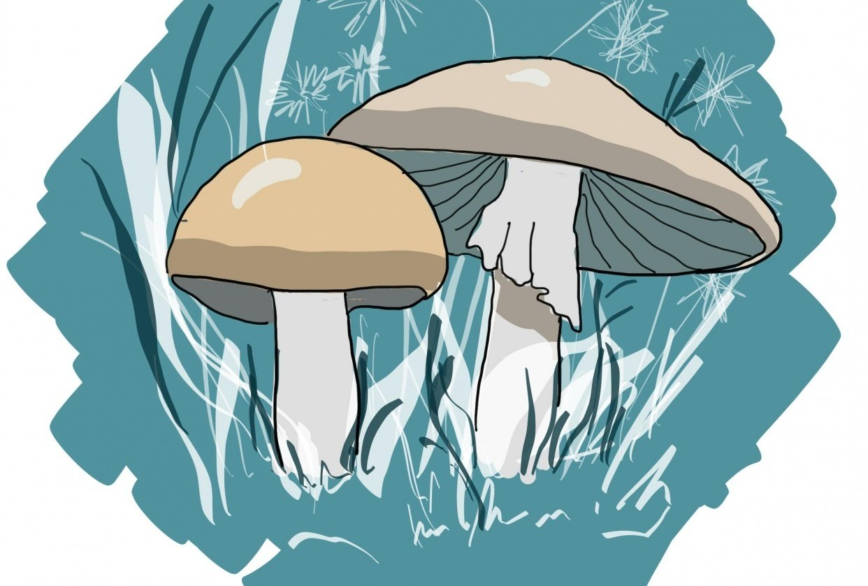 Mushrooms (3 technical) - student project