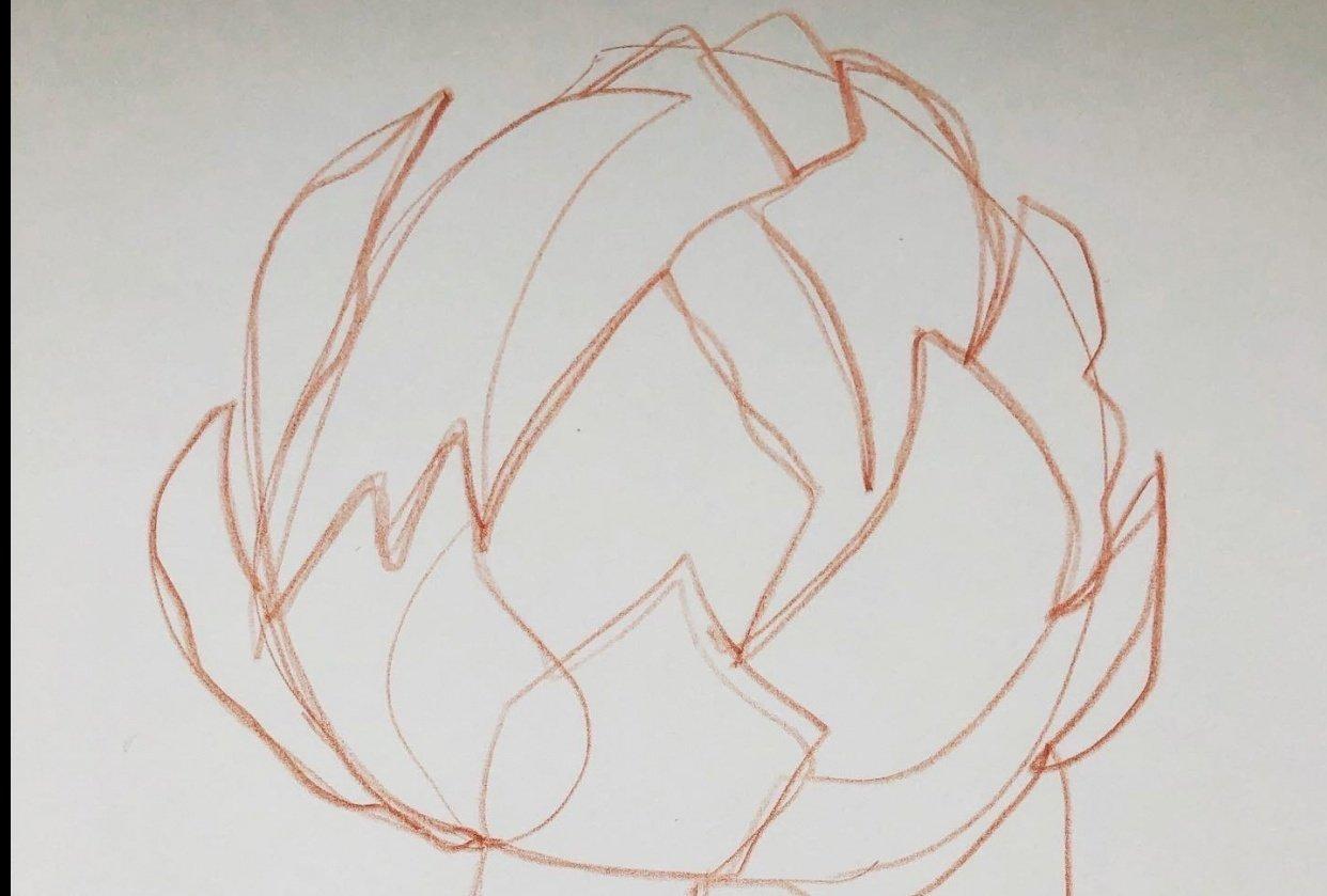 Exploration - artichoke drawings - student project