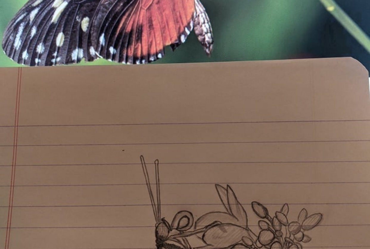 ButterFly! - student project