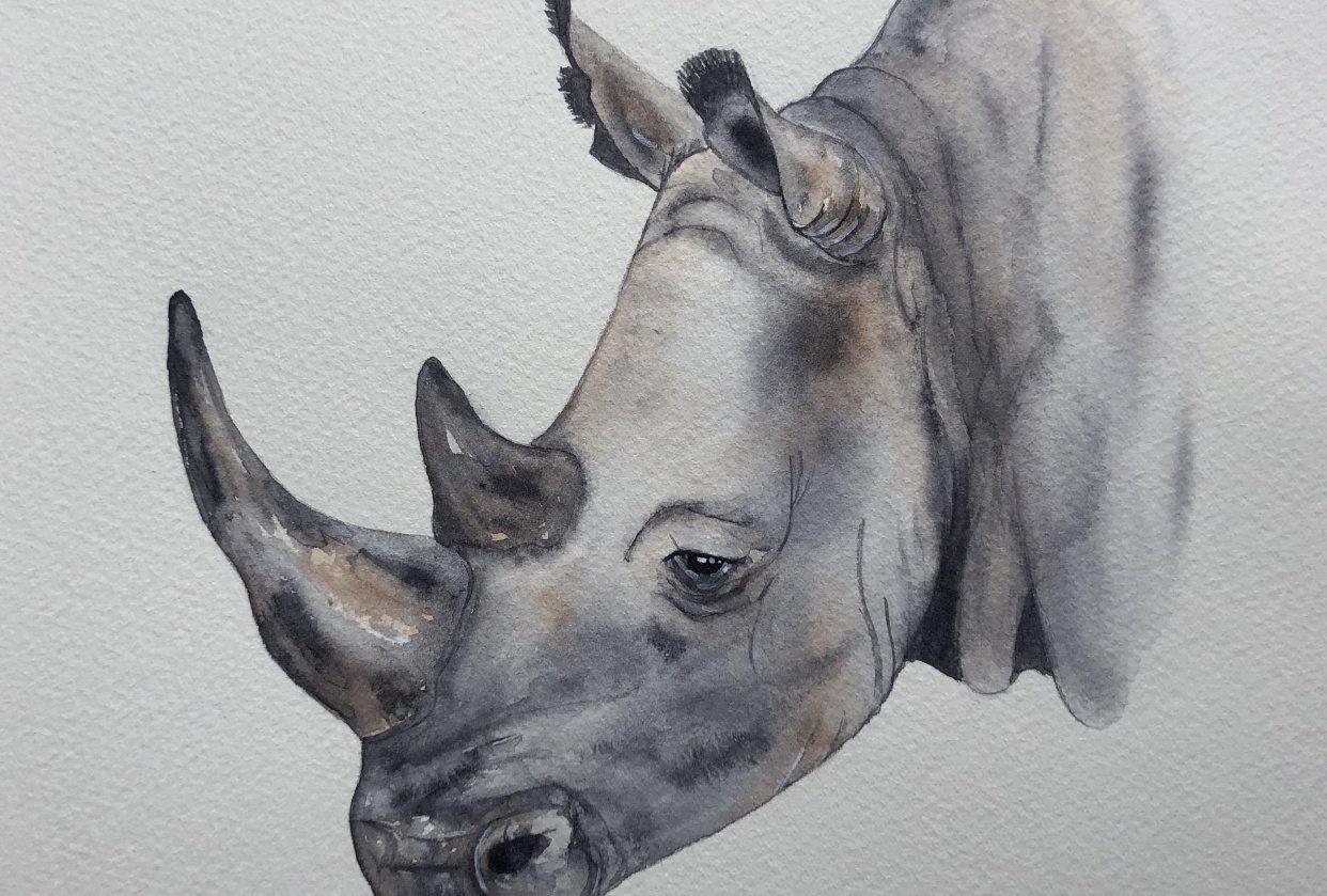 Jane's Rhinoceros - student project