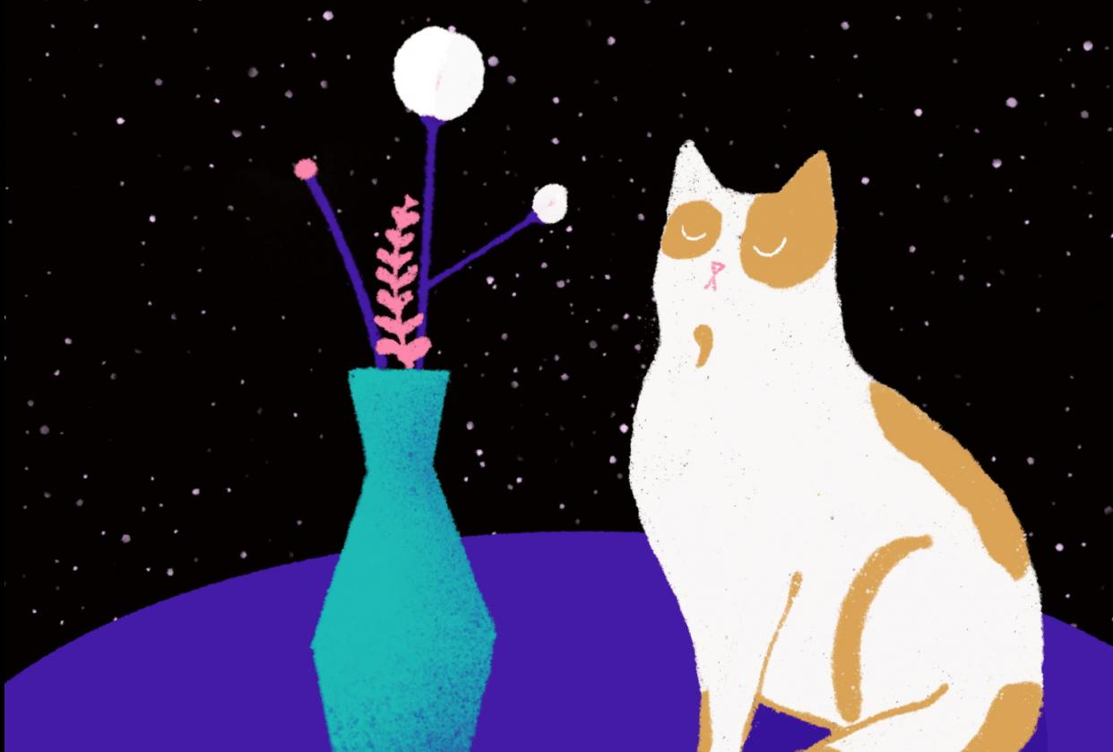 Grumpy Cat - student project