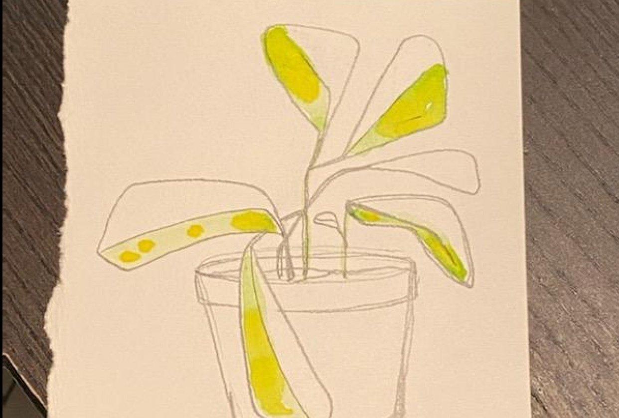 Little Plant Pots - student project