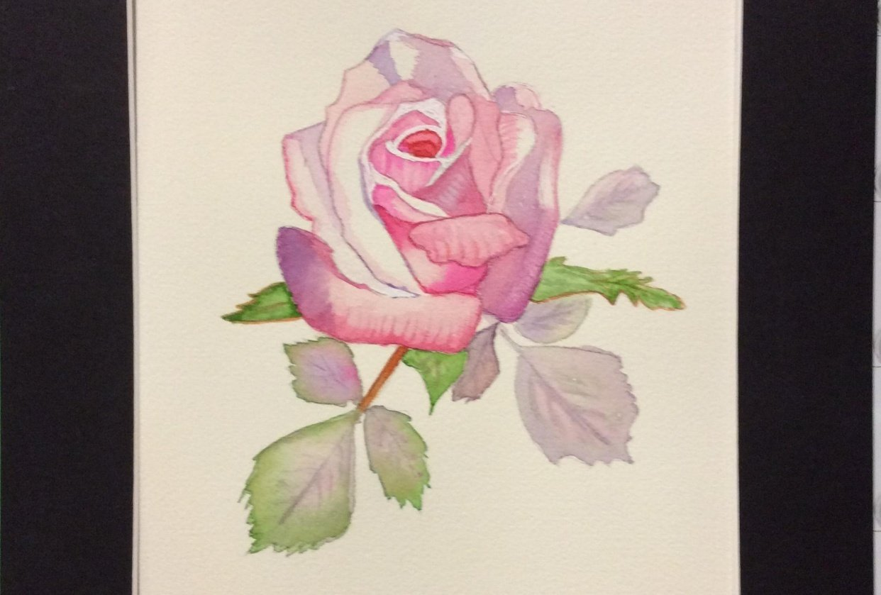 Pink Rose 2020-Donna D - student project