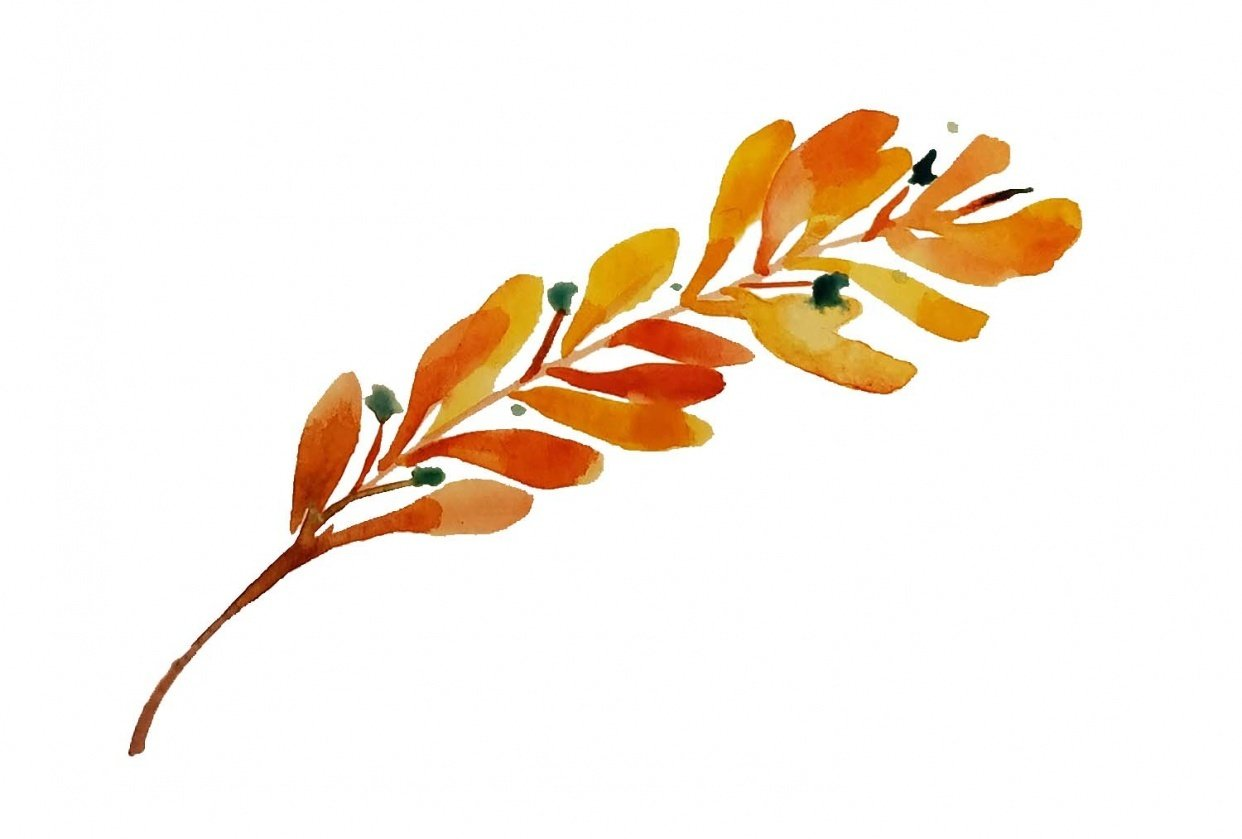 fall olive branch - student project