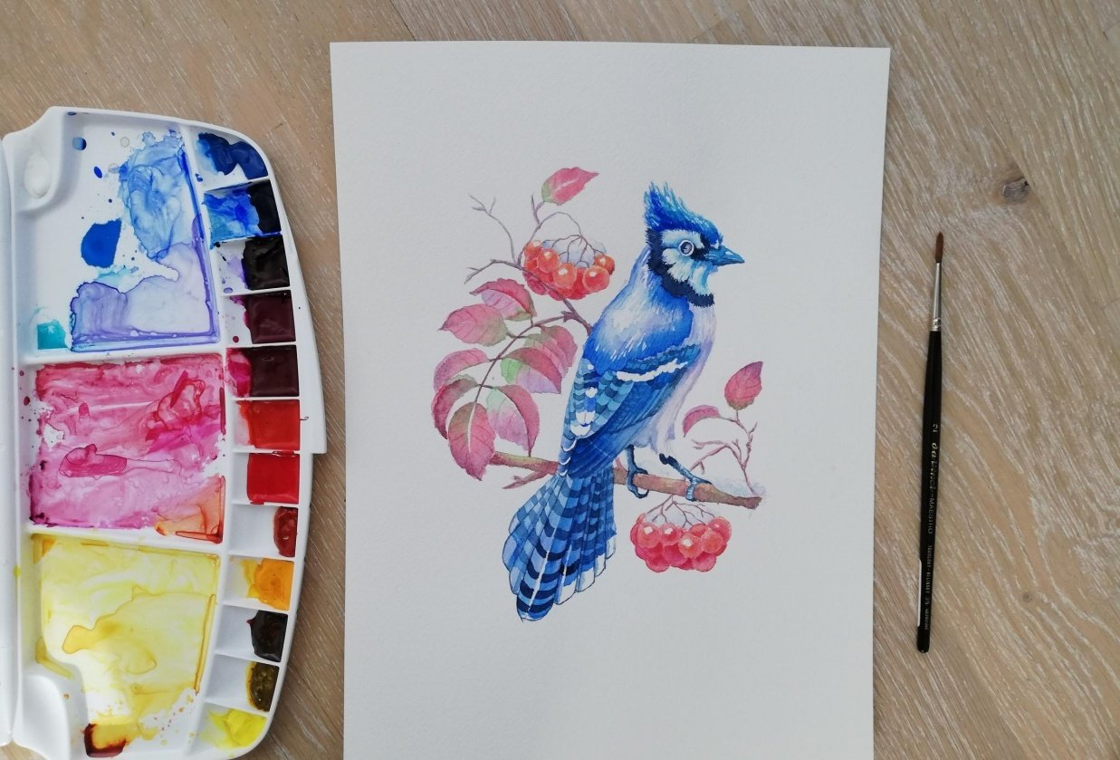 Watercolor BlueJay - student project