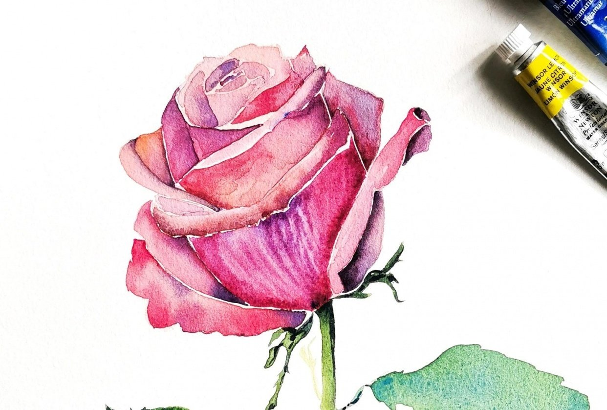 Watercolor rose - student project