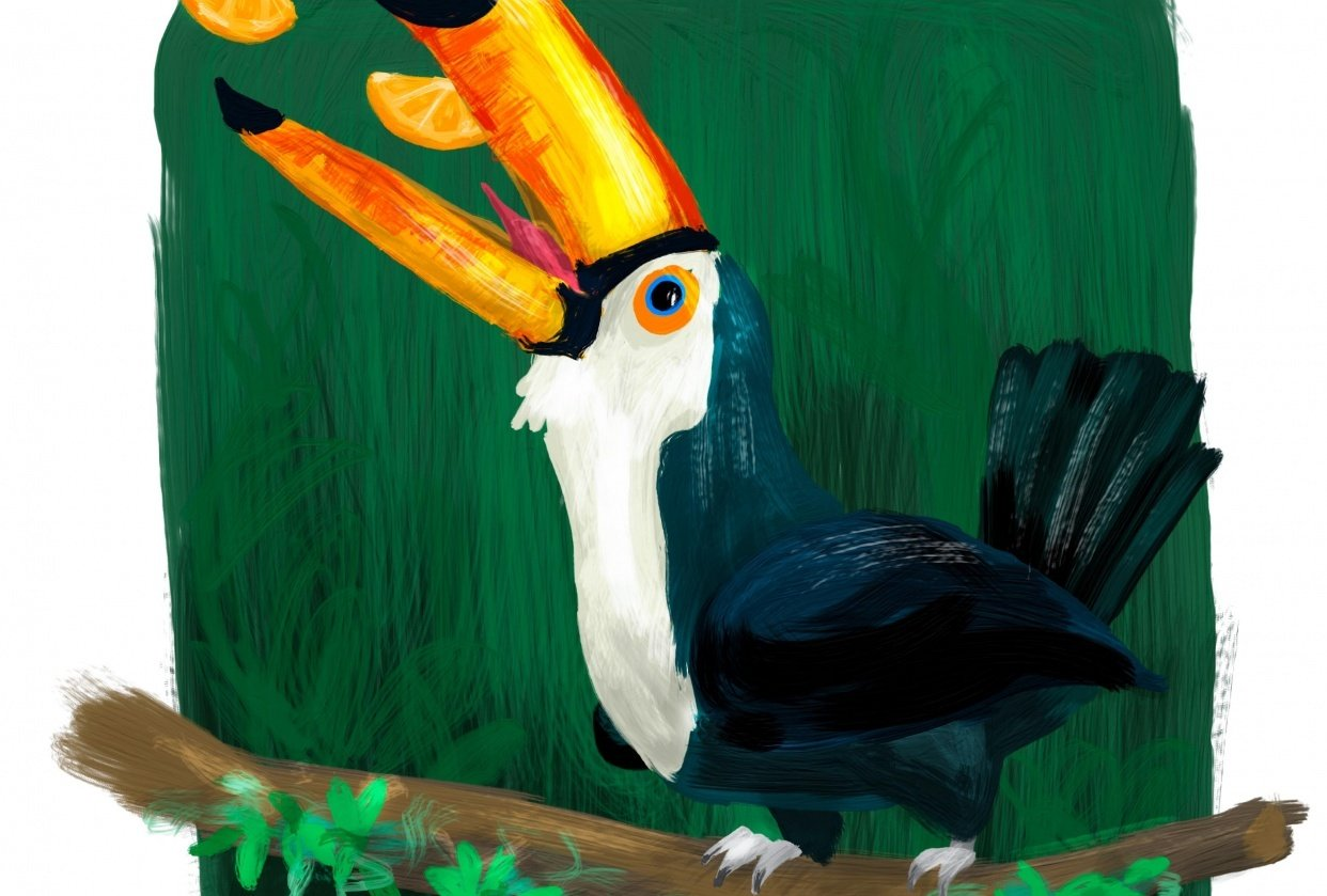 Feeding the Toucan - student project