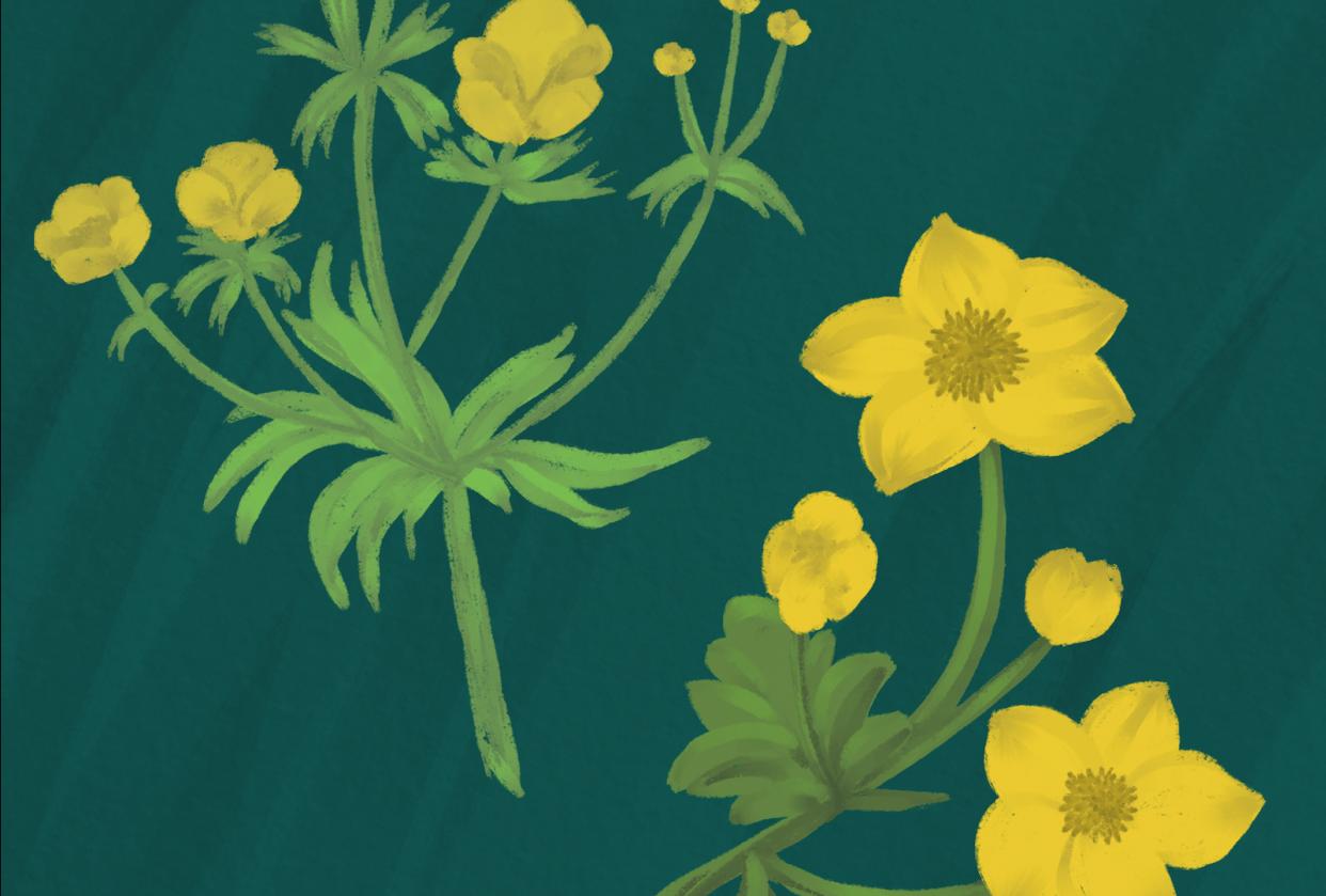 Guache florals - student project